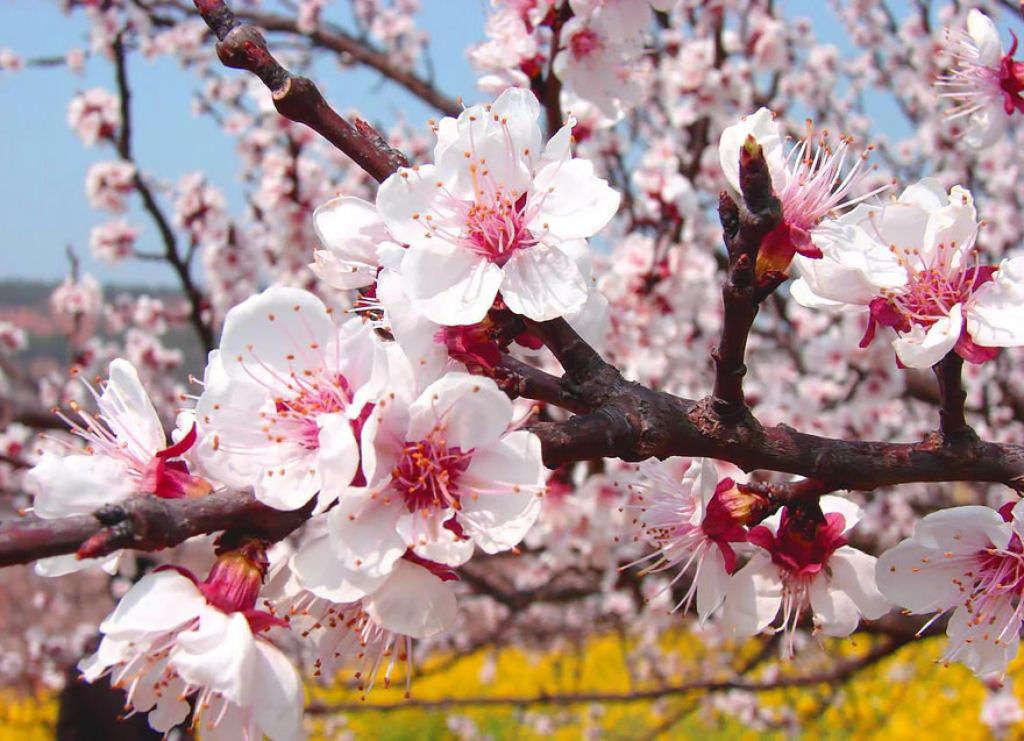 Thời kỳ thấp điểm thưởng hoa rơi vào tháng 4, tháng 5, và tháng 10, tháng 11.