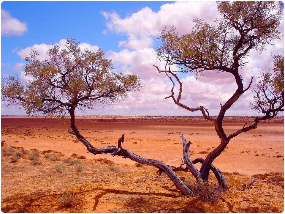 Sa mạc Simpson, Úc