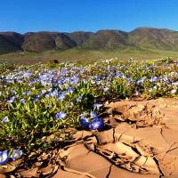 Những sa mạc kỳ lạ nhất thế giới