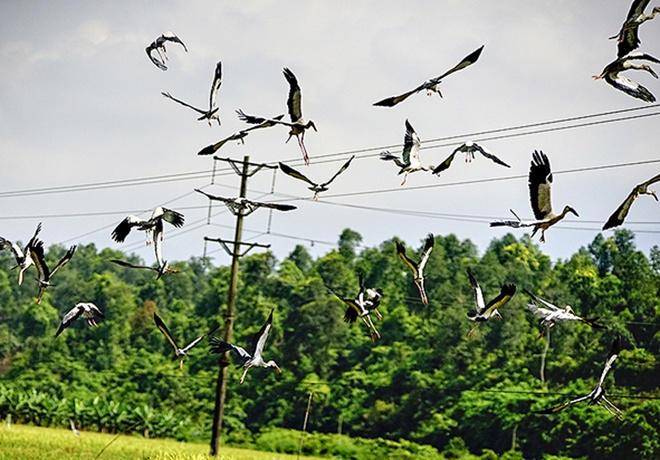Theo ông Bạch Văn Minh, dân tộc Giáy tại xã Bản Qua, đàn chim đến từ phương Bắc này thường sà vào ruộng đã gặt để bắt côn trùng hoặc những con cá nhỏ.