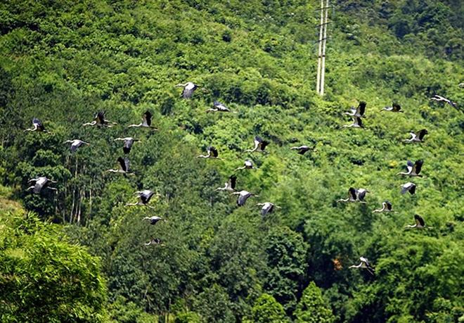 Khi thấy người từ xa là chúng bay đi, nên người dân rất khó tiếp cận.