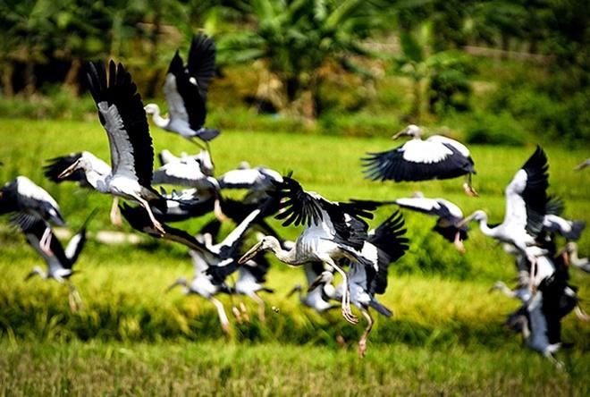 Theo phỏng đoán của một số người thì đây có thể là chim nhạn trong Sách Đỏ Việt Nam.