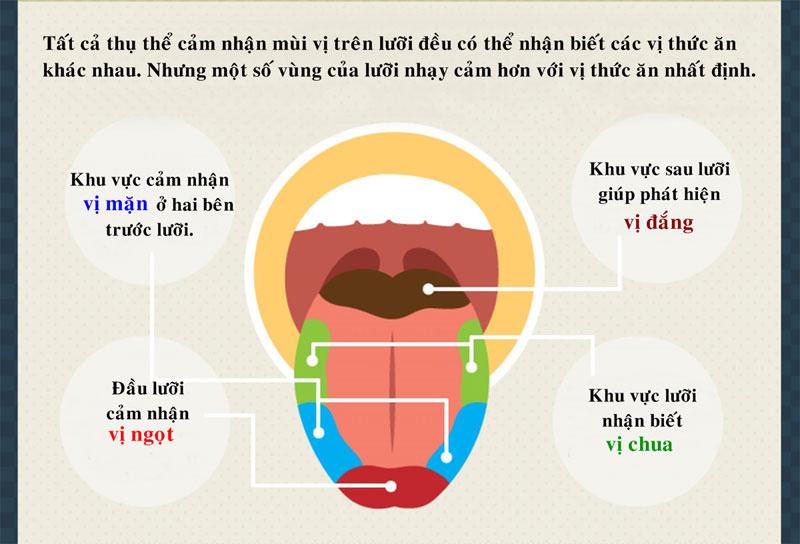 Tất cả thụ thể cảm nhận mùi trên lưỡi đều có thể nhận biết các vị thức ăn khác nhau.