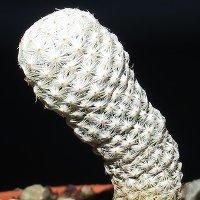Điểm mặt những loài thực vật quý hiếm nhất hành tinh