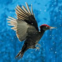 Bức tranh muôn màu về các loài chim