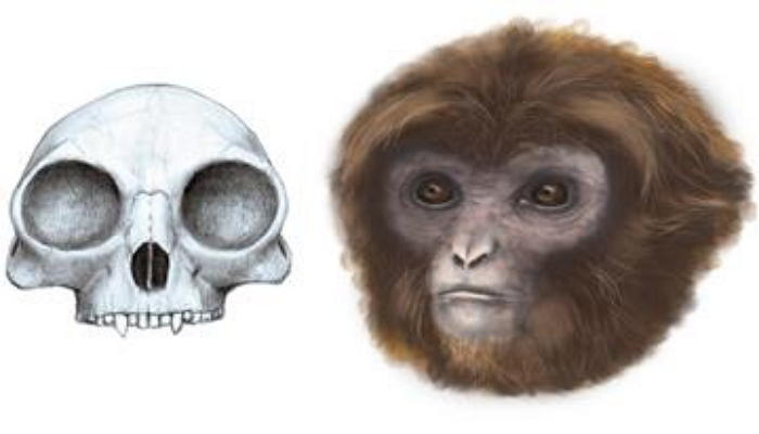 Hóa thạch gồm bộ xương và hộp sọ