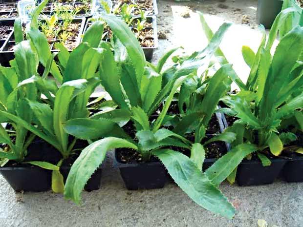 Người dân có thể trồng cây trong chậu để tiết kiệm diện tích