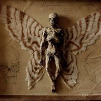 Bộ sưu tập xương người tý hon dưới hầm lâu đài cũ