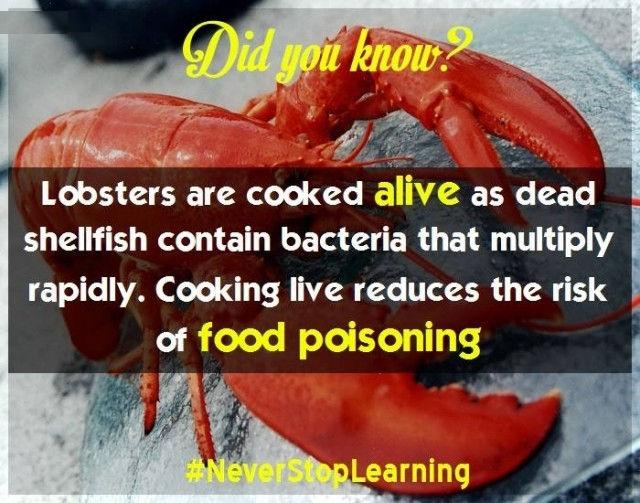 Tôm hùm nên được nấu nướng khi còn sống vì khi tôm chết vi khuẩn sẽ nhân lên nhanh chóng. Nấu nướng tôm hùm sống làm giảm nguy cơ ngộ độc thực phẩm.