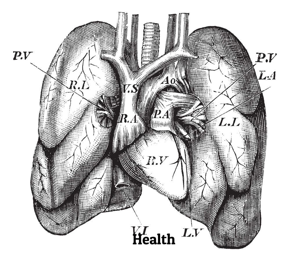 Người Ai Cập cổ đại tin rằng, trái tim chứ không phải bộ não là nguồn gốc của cảm xúc, trí tuệ, khả năng ghi nhớ.