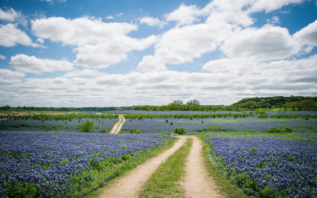 Đường hoa Bluebonnet, Texas