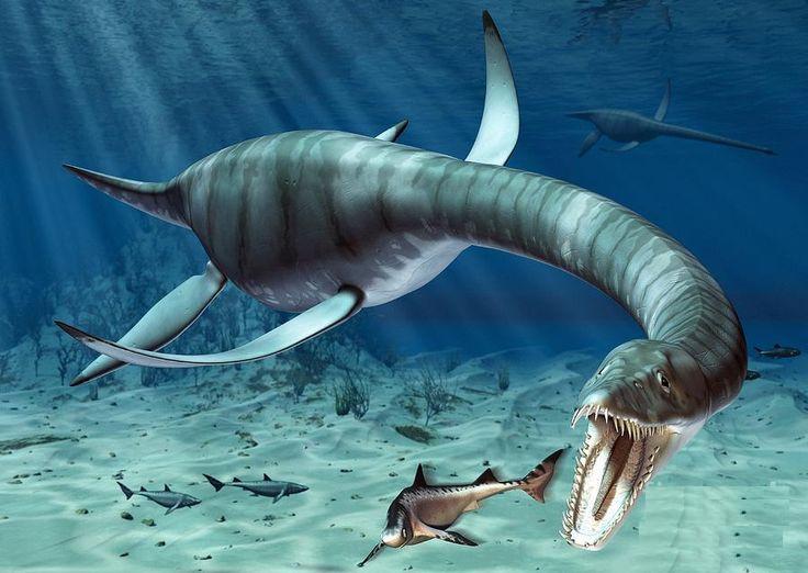Hình ảnh tái hiện của Plesiosaur.