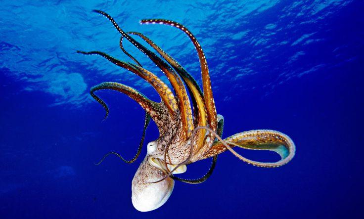 Các đại dương ấm lên có thể làm gia tăng tốc độ cho chu kỳ sống của các loài thân mềm.