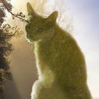 Những chú mèo khổng lồ khiến người xem hoa mắt