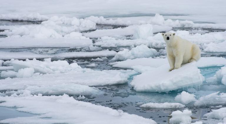 Lần gần nhất khu vực Bắc Cực không có băng giá là từ 100.000 - 120.000 năm về trước.