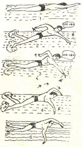 Bơi chân và tay trườn sấp phối hợp thở dưới nước.