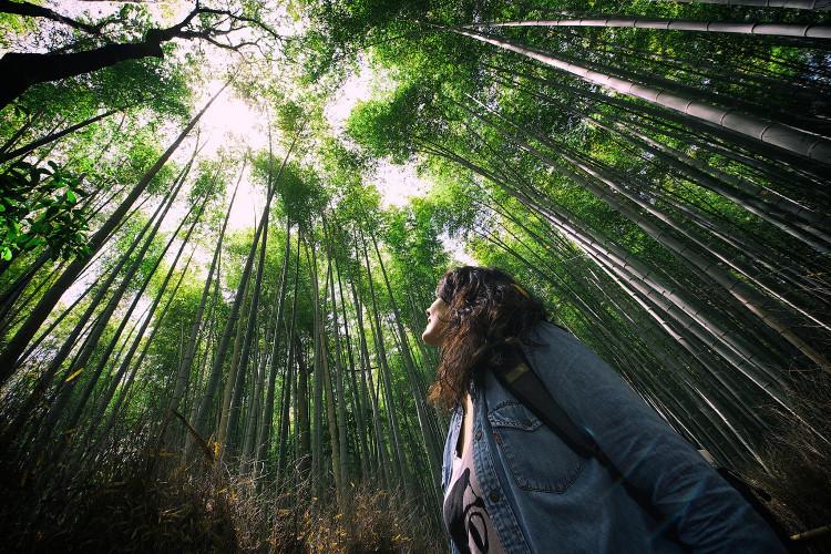 Trước khi vào rừng, cần phải có kiến thức về rừng.