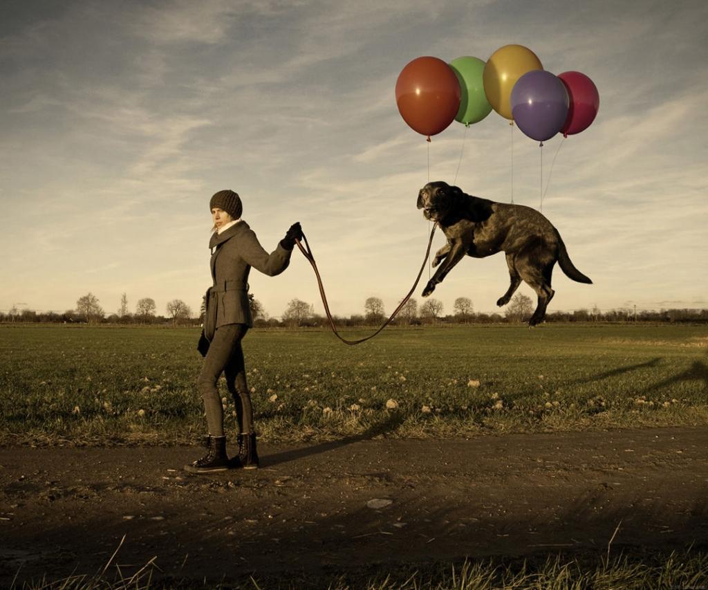 Chó lơ lửng trên không như những quả bóng bay.