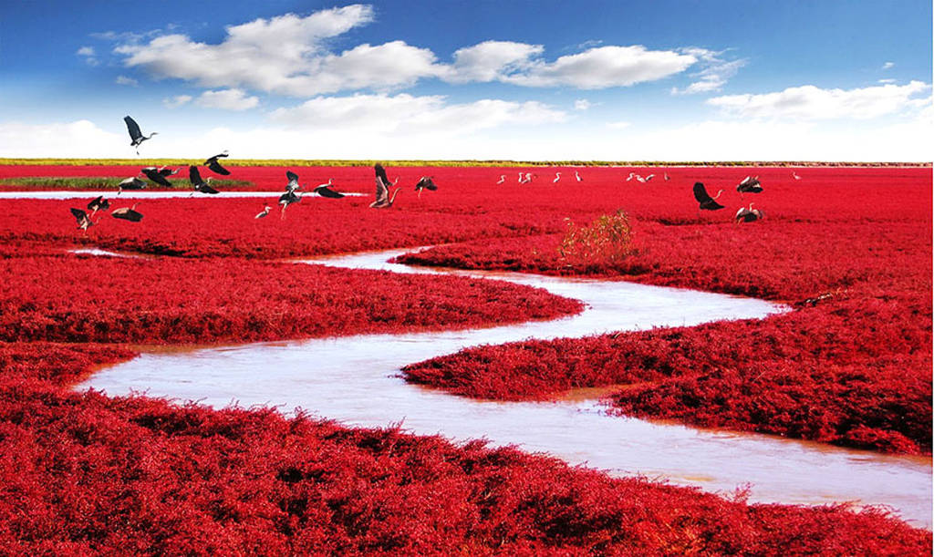 Bãi biển đỏ, Panjin