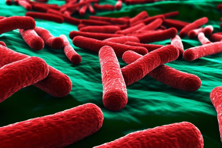 Vi khuẩn E.coli.