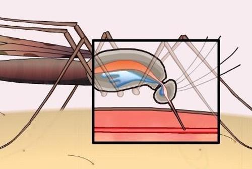 Tại sao muỗi cắn lại gây ngứa?