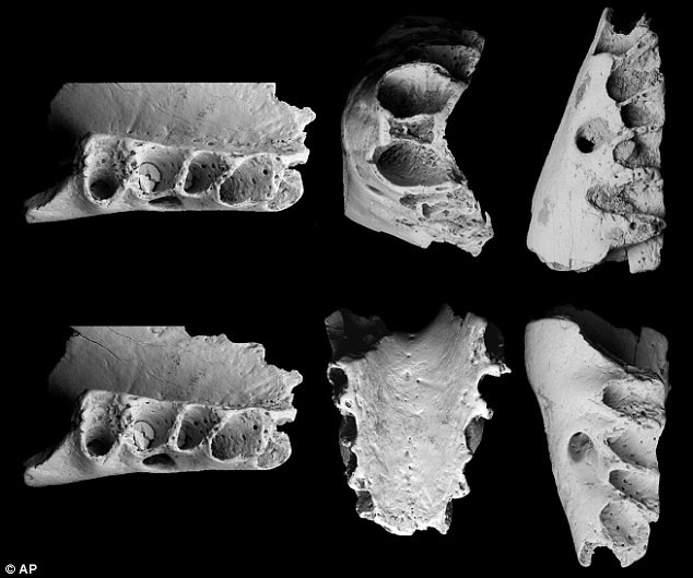 Mẫu răng được tìm thấy rất đa dạng, cho thấy chế độ ăn được phân chia rất rõ ràng ở các loài thú.