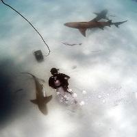 Chuyên gia về cá mập tiết lộ cách phản đòn sát thủ biển cả