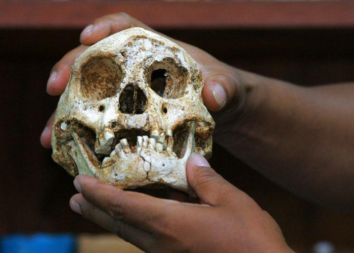 Hóa thạch sọ của người Hobbit được tìm thấy năm 2014 ở Indonesia.