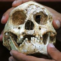 """Tìm thấy xương """"người lùn"""" Hobbit 700.000 năm ở châu Á"""