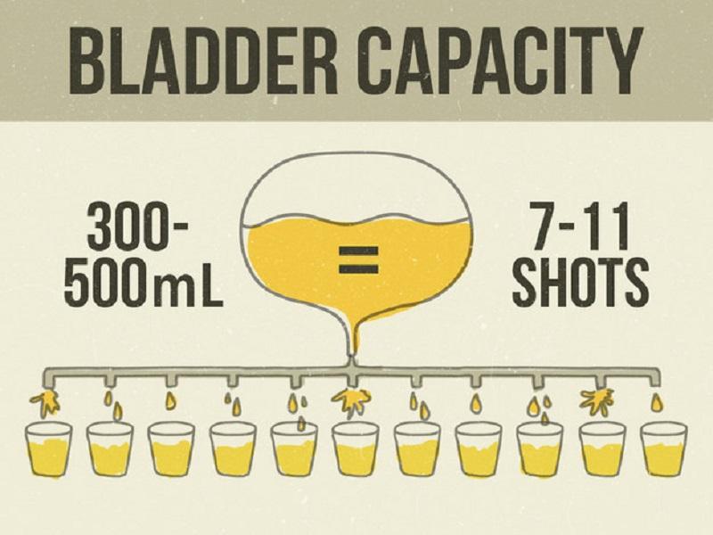Một bàng quang người lớn trung bình có thể chứa 300-500 ml nước tiểu