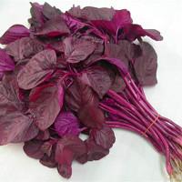 Kỹ thuật trồng rau dền tại nhà
