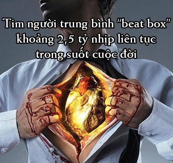 Trái tim người lớn trung bình đập 72 lần một phút