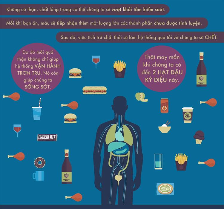 Không có thận, chất lỏng trong cơ thể chúng ta sẽ vượt ngoài tầm kiểm soát.