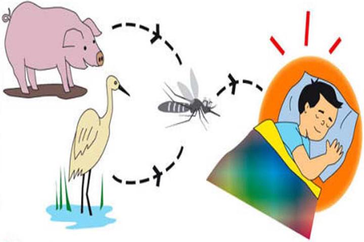 Vật chủ mang mầm bệnh là lợn và một số loài chim