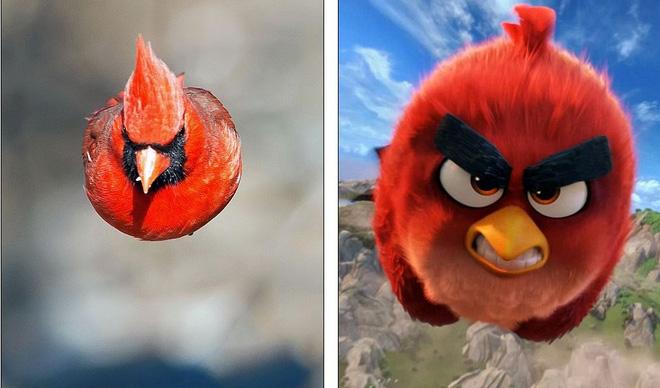 """Chú chim hồng y mà Kushner chụp giống """"y hệt"""" như Red trong Angry Birds"""