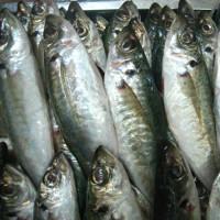Cách nhận biết cá nhiễm độc phenol