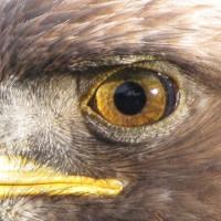"""Những """"đôi mắt thần"""" trong tự nhiên"""