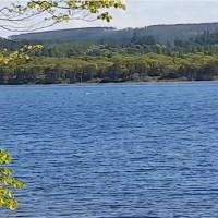 """Video: """"Bướu lưng"""" nhô trên mặt nước nghi thuộc về quái vật Loch Ness"""