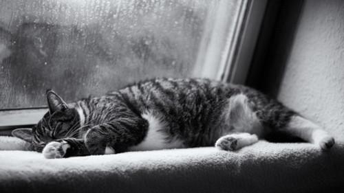 Những cơn mưa buồn bã luôn tạo ra cảm giác mệt mỏi và buồn ngủ.