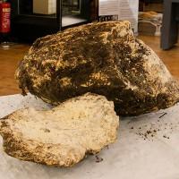 Tảng bơ vẫn ăn được sau 2000 năm chôn dưới đầm lầy Ireland