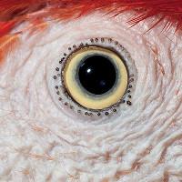 Kinh ngạc những cặp mắt tuyệt đẹp trong vương quốc động vật
