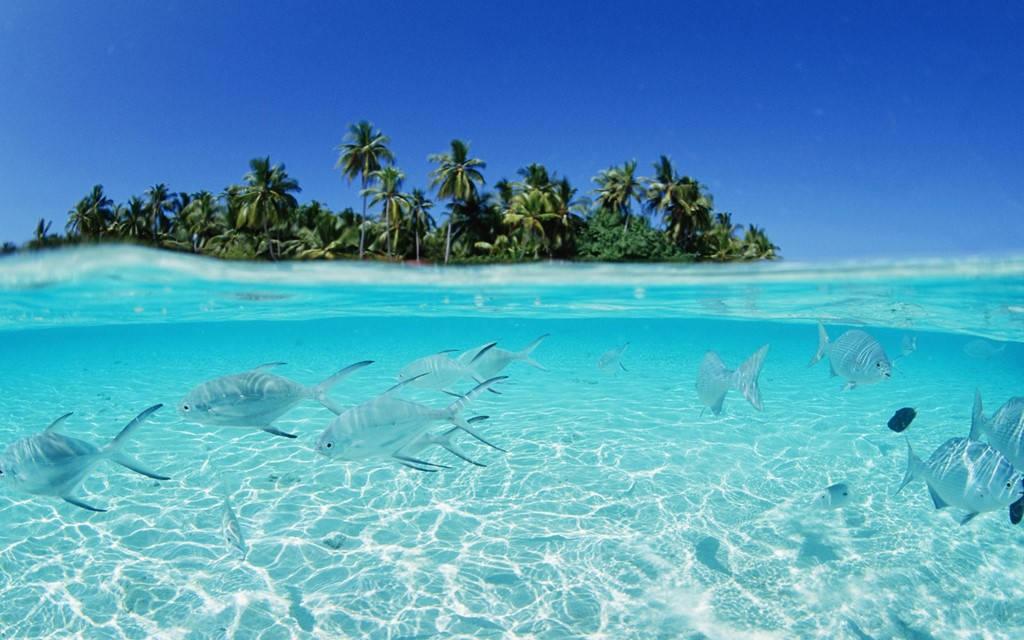 Hệ động vật biển phong phú và làn nước trong vắt khiến nơi đây là điểm lặn lý tưởng cho người yêu biển.