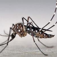 Phát hiện một loạt hoạt chất có tác dụng kháng virus Zika
