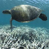 Phát hiện gene cứu san hô khỏi chết đói