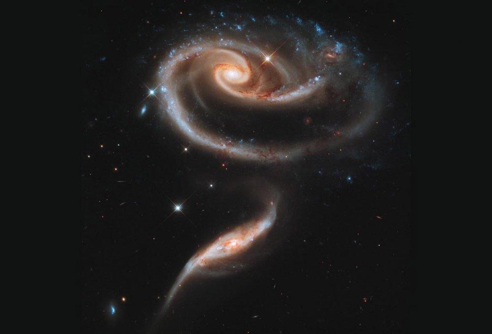 Arp 273 là một nhóm các thiên hà trong chòm sao Andromeda trông khá giống như một bông hoa hồng rất lớn.