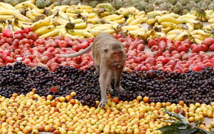 Khỉ không đuôi và vượn không phải ngu ngốc, chúng biết cách thưởng thức món ăn mà mình tiếp xúc.