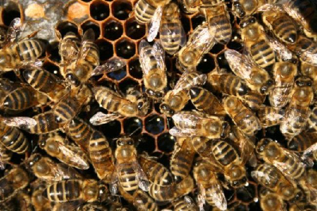 Ong bị đuổi ra khỏi tổ
