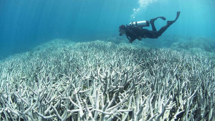 Rạn san hô Great Barrier Reef đang bị nhuộm trắng vì axit trong nước biển tăng cao.