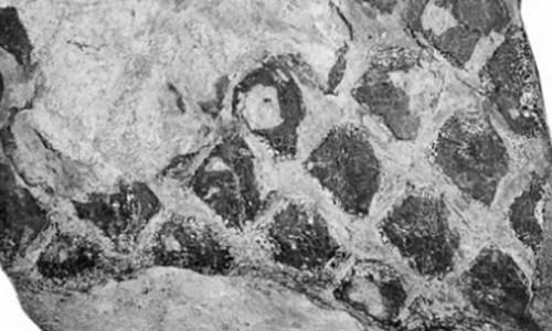 Dấu vết được coi là hóa thạch rồng đen ở Vân Nam, Trung Quốc.