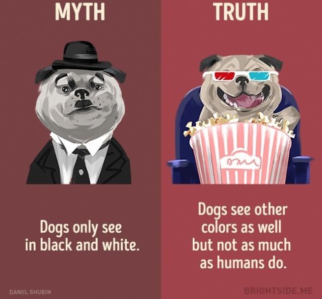 Sự thật là chó còn có thể nhìn thấy những màu khác nhưng không nhiều như con người chúng ta mà thôi.